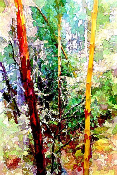 Woodland Arbutus Cluster